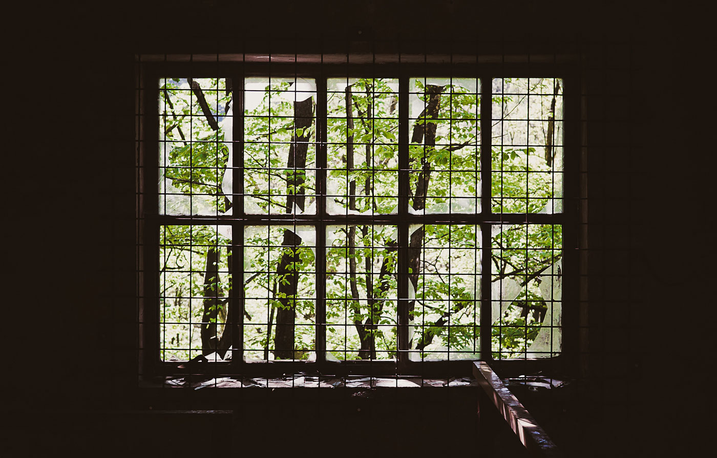 trees-broken-inside-window